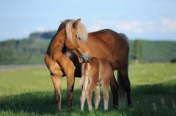 horse-1268801_960_720