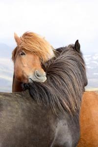 horses-3004645_960_720