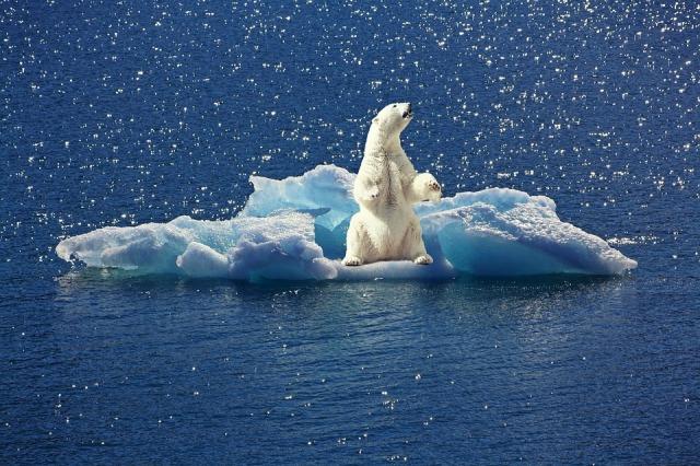 polar-bear-2199534_960_720